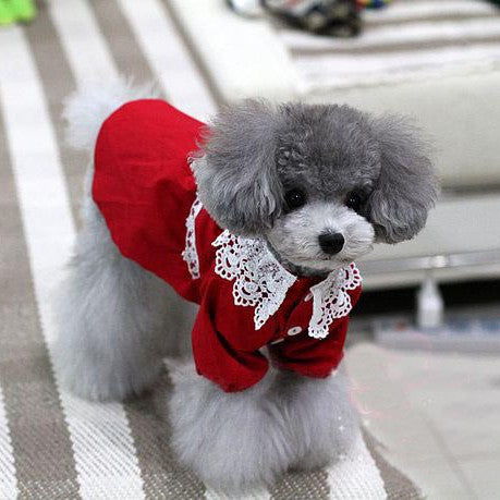 Red Festive Lace Collar Gown Designer Fashion for Dog & Pet Clothing