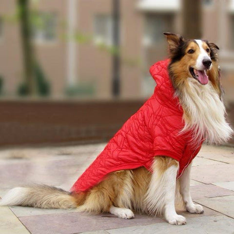 Soft Cotton Padded Fashion Dog Jacket for Pet Clothes & Pets Stores