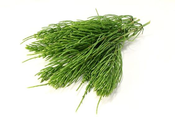 Read This Before You Buy Horsetail Tea for Hair Growth!