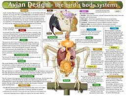 Avian Anatomy & Physiology