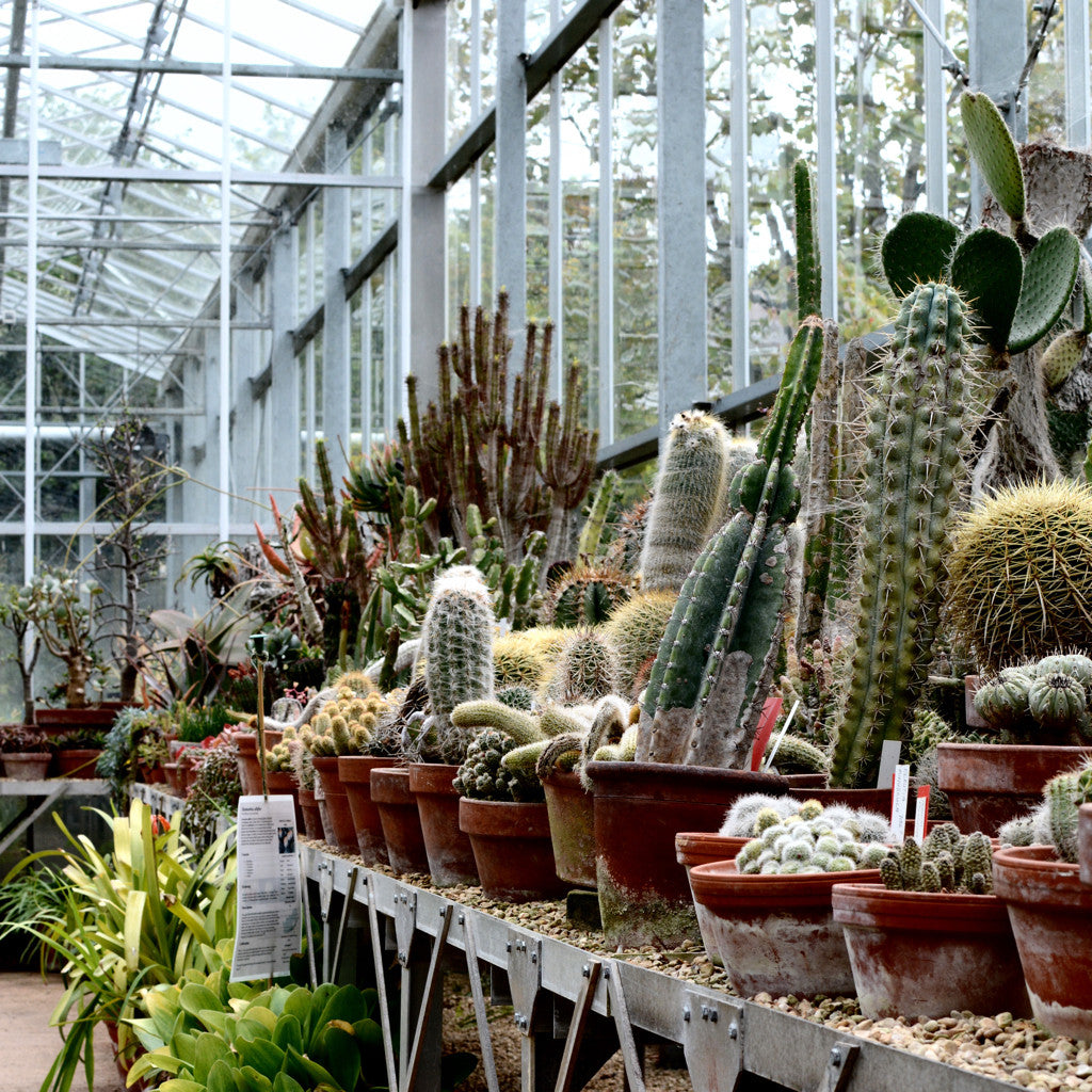 TRAVEL NOTES - Bristol Botanic Gardens