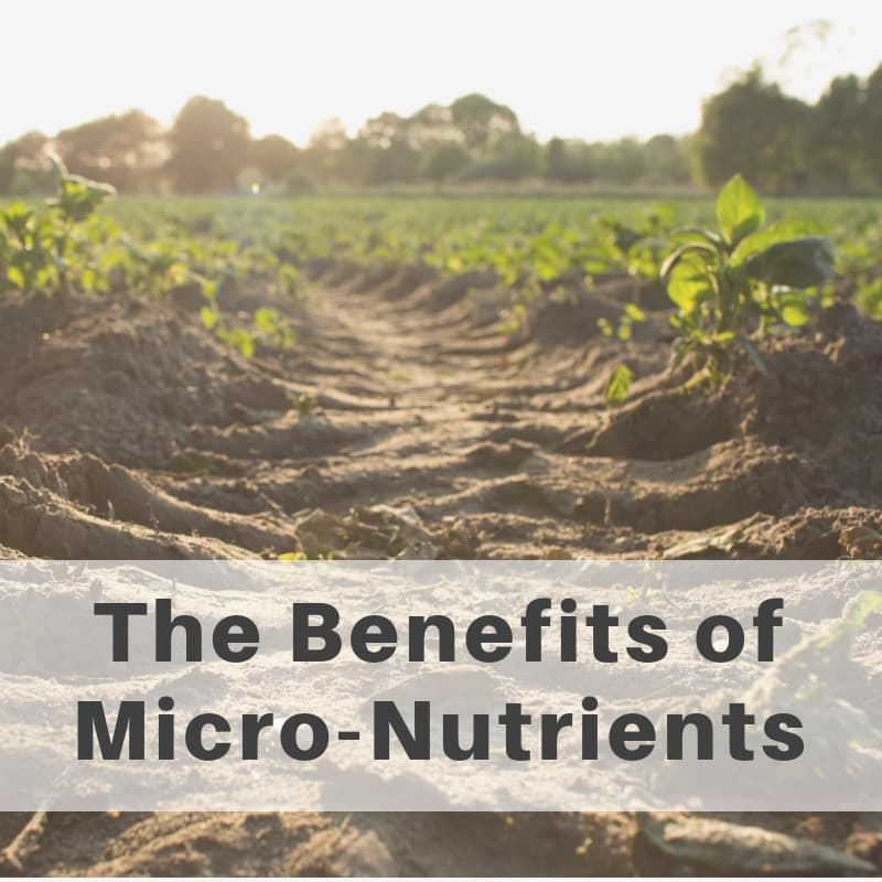 The Benefits of Micronutrients