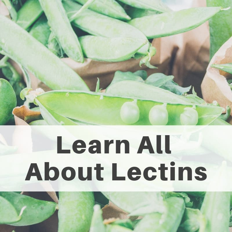 All About Lectins