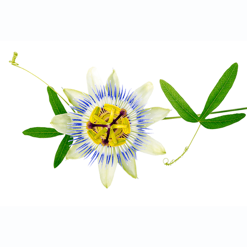 Passion Flower Extract Supplement