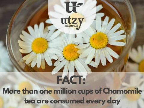 German Chamomile Tea
