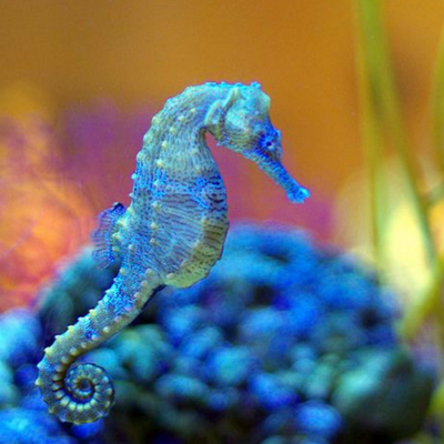 A Sea Horse Kind of Love