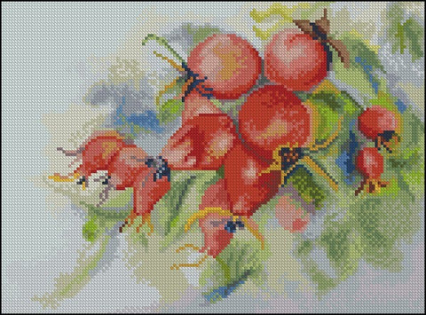 free cross stitch patterns -  A Hedge Rose - www.crossstitchclub.com - 1