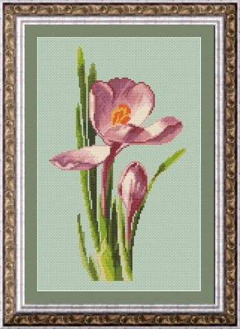 free cross stitch patterns -  Crocus Plant - www.crossstitchclub.com - 1
