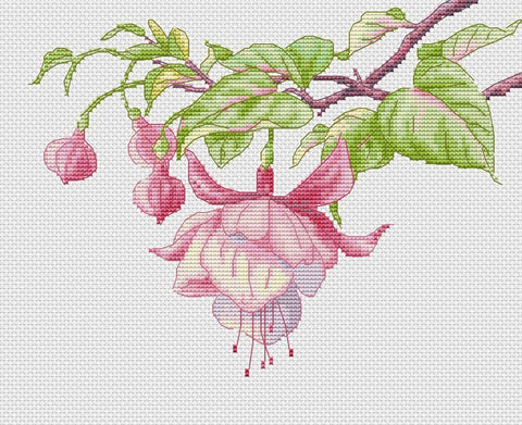 free cross stitch patterns -  Fuchsia - www.crossstitchclub.com - 1