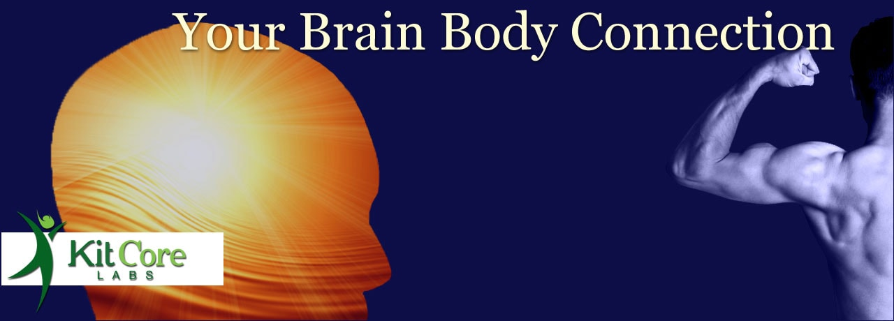 your brain body connection