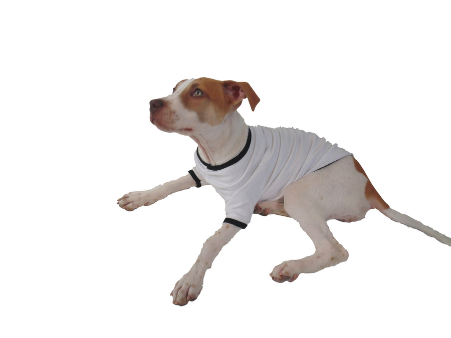 Trick or Teach Dog Shirt White with Black Small