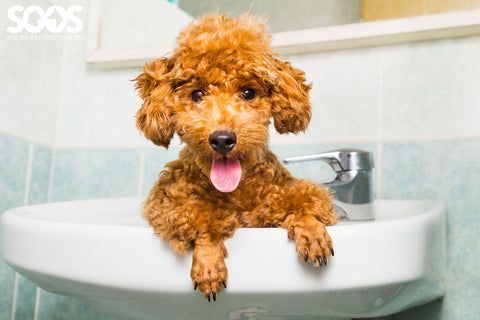 pet wash products