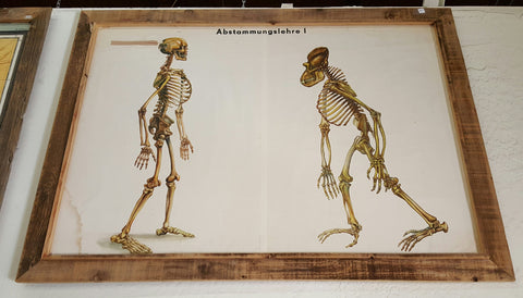 Skeletal Illustration Poster from Germany, Framed in Barn Wood