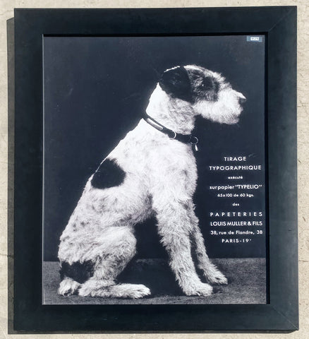 Framed Dog Photograph