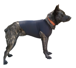 Azores Cattledog in Black Swaddleshirt