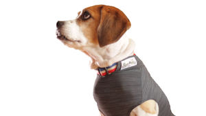Dog Anti-Anxiety Shirt