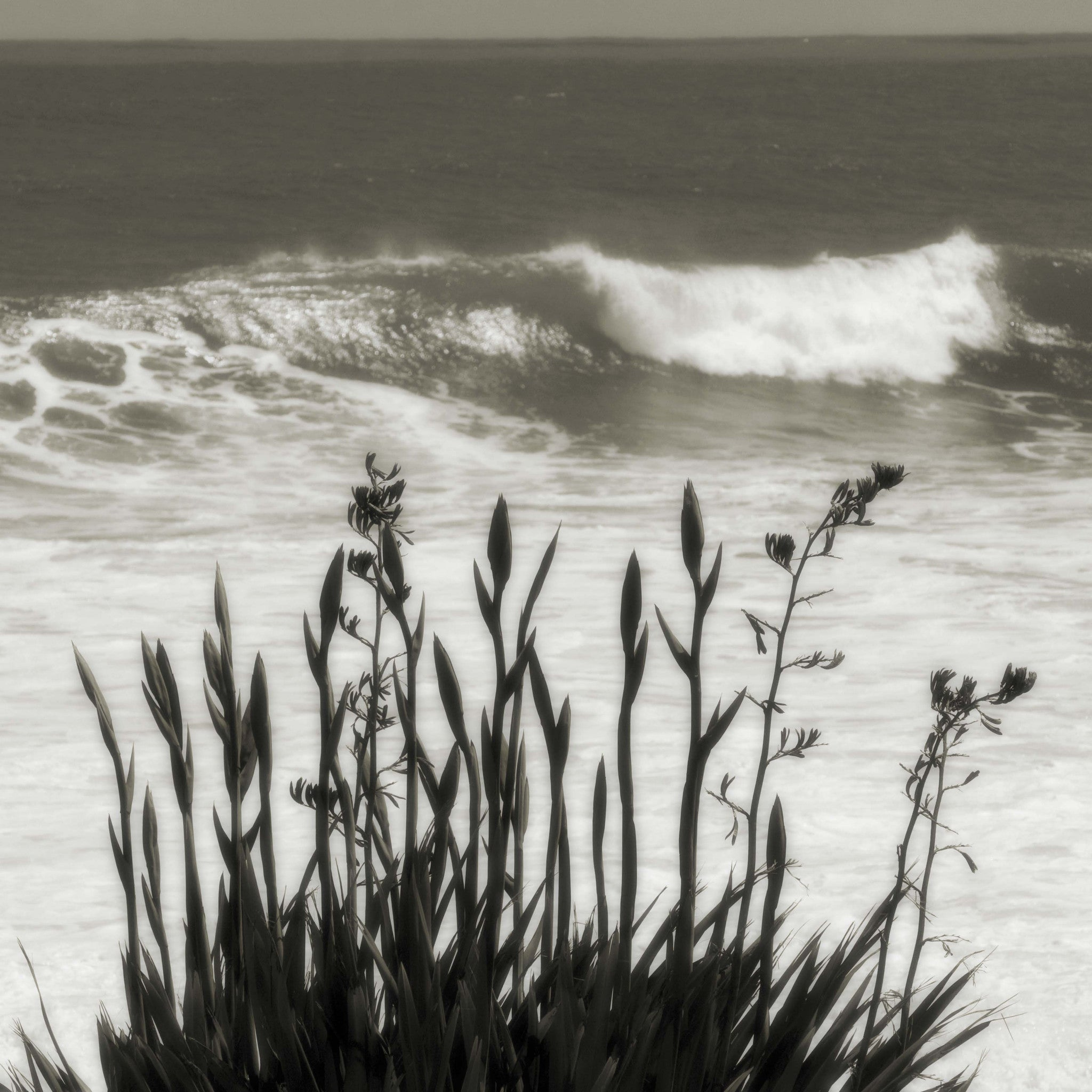 Flax and Wave, Manu Bay