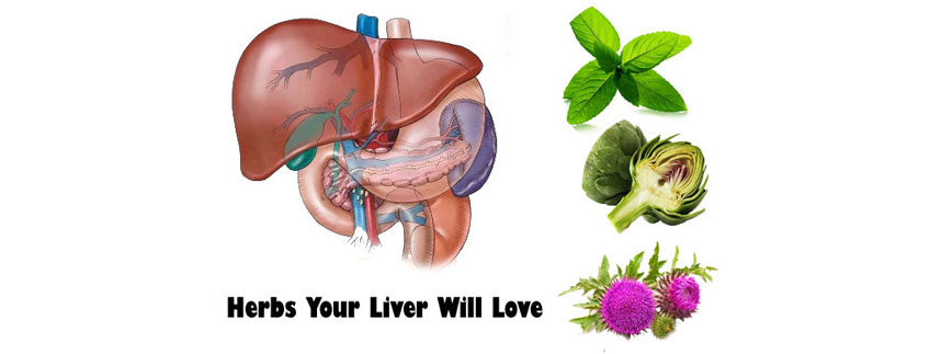 Effective Herbs and Dos & Don'ts Of Liver Health