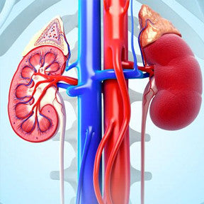 Kidney or Renal diseases are those diseases which affect the ability of our kidneys