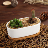 Ceramic succulent planter flower Pots Cactus Plant Pot 2pcs/lot - UYL Online Store