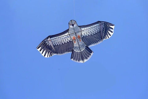 Black Eagle Kite