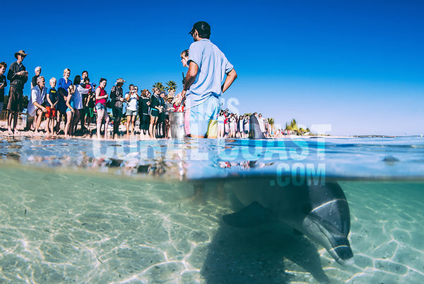 dolphin feeding at monkey mia shark bay western australia