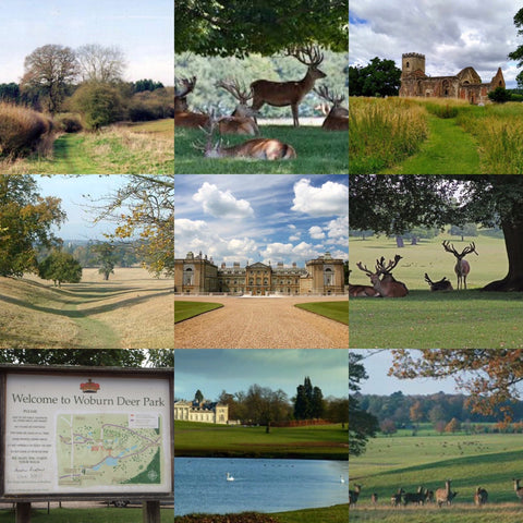 Woburn Abbey & Deer Park hike - Saturday 12th December