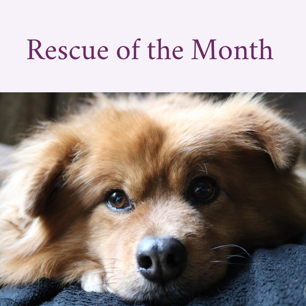 Rescue Of The Month - Pom Pom