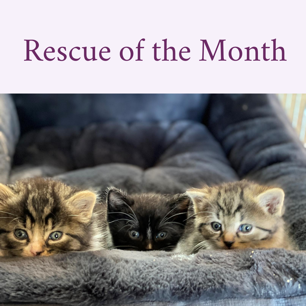 Rescue of the Month - Obie, Poe & Puck