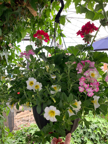 Mixed Hanging Basket # 2
