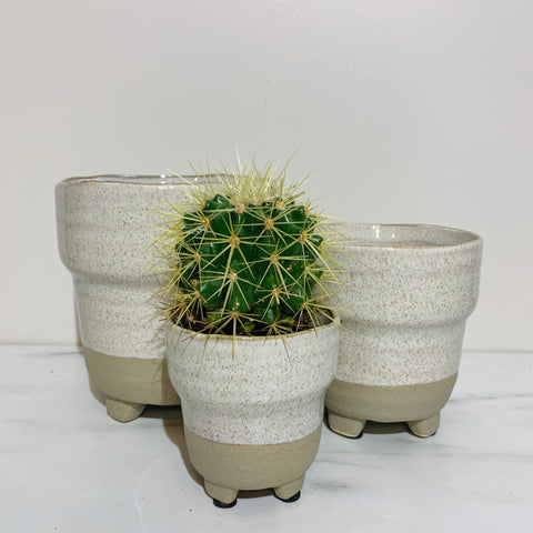 White Sand Succulent Pot