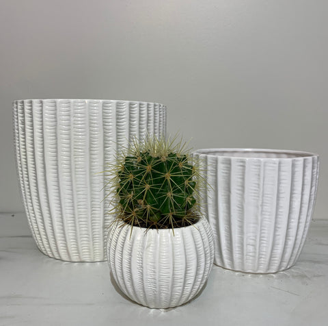 White Cactus Cut Pot