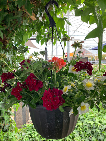 Mixed Hanging Basket # 8