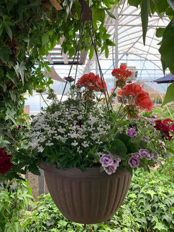 Mixed Hanging Basket # 5