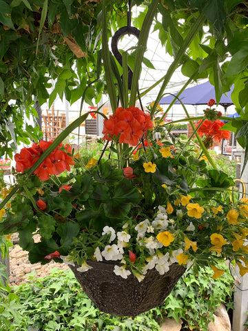 "12"" Hanging Basket (Peat Pot) #2"
