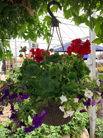"12"" Hanging Basket (Peat Pot) #1"