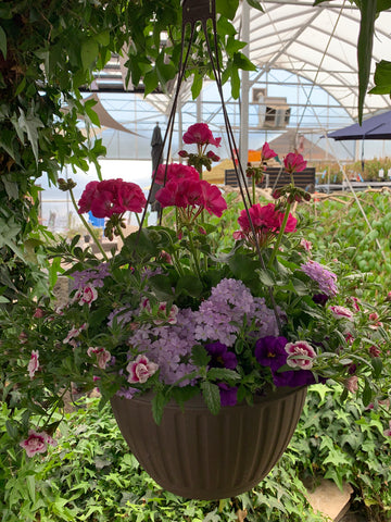 Mixed Hanging Basket # 7