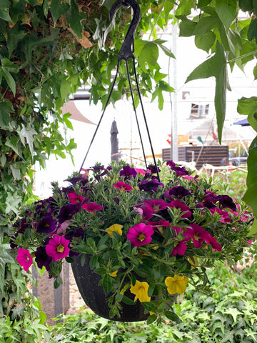 Hanging Basket - 'Million Bells' Calibrachoa