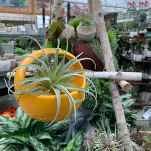 Hanging Air Plant Pots (4415228969043)