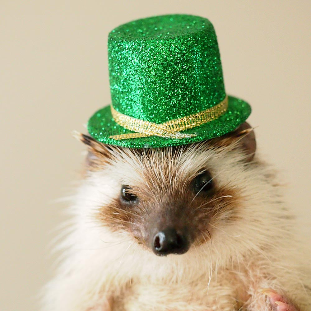 St. Patrick's Day Hedgehog