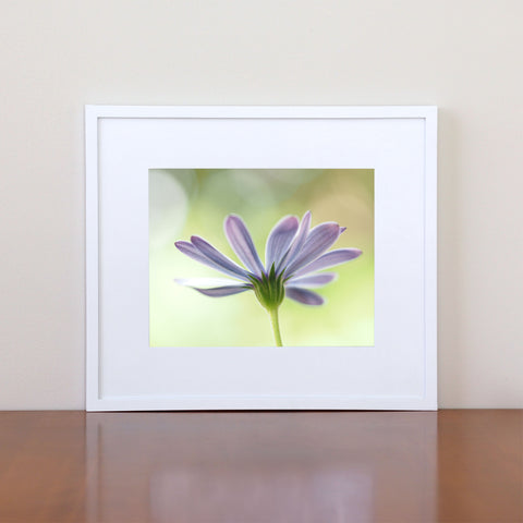 Daisy Photography Wall Art Giclee Print