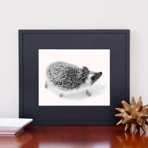 Hedgehog Photos - Giclee Print B&W