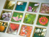 Nature Photography Enclosure Cards