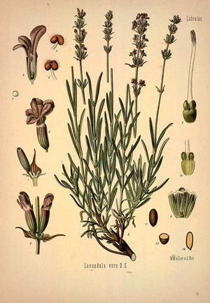 The History of Plants and Herbs in Medicine and Spirituality