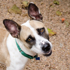 Faith was near death and had nearly given up when she was rescued and rehabilitated by a NO KILL shelter.