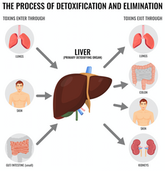 Process of Detoxification and Elimination Diagram