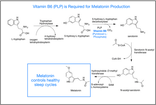Conversion of Tryptophan to Melatonin Requires Vitamin B6