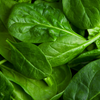 spinach antioxidant polyphenol supplement