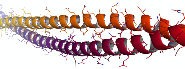 Keratin Protein Double Helix Intermediate Structure