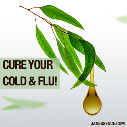 5 WAYS EUCALYPTUS OIL WILL CURE YOUR COLD/FLU!